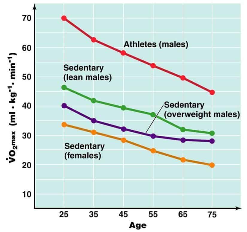 Razlike v aerobni zmogljivosti med različnimi skupinami oseb. Vrhunski športniki imajo skoraj 2x višjo zmogljivost kot povprečne aktivne osebe.